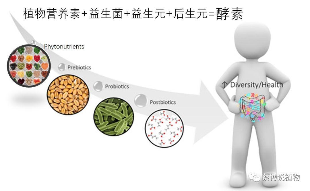 酵素进口清关有哪些监管条件